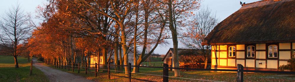 Reitanlage Tegelhof Rügen Reiten + Ferienhaus